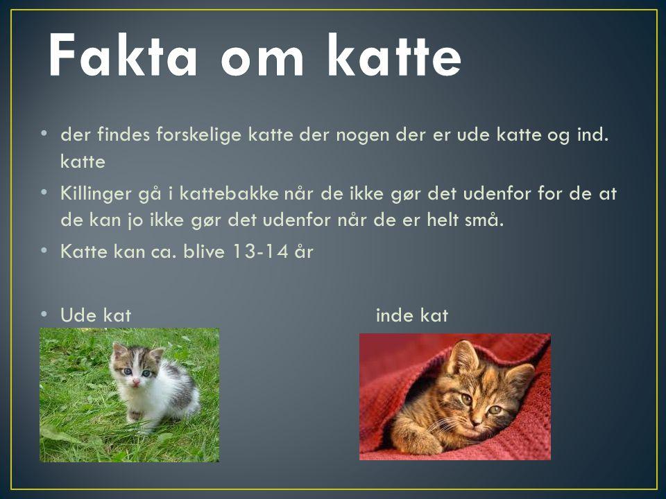 Fakta om katte der findes forskelige katte der nogen der er ude katte og ind. katte.