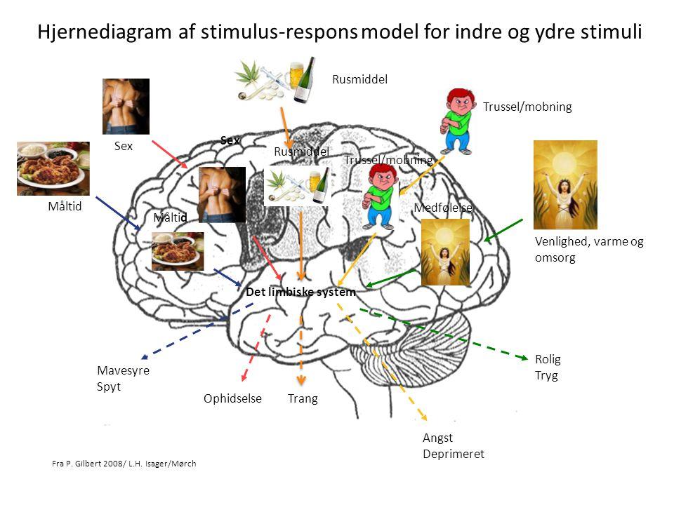 Hjernediagram af stimulus-respons model for indre og ydre stimuli