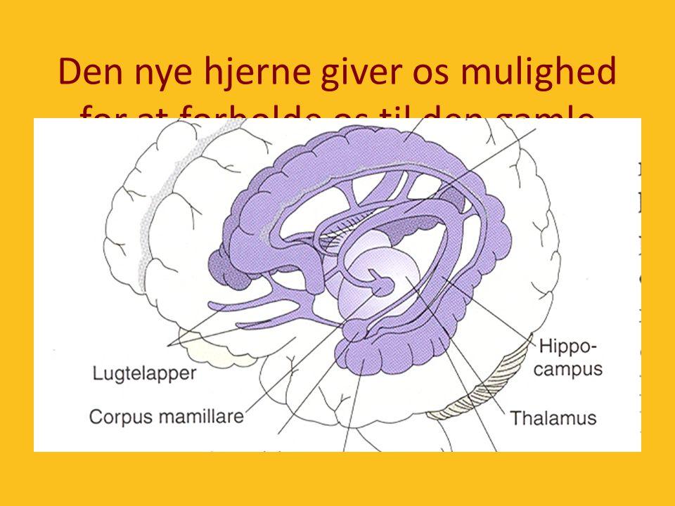 Den nye hjerne giver os mulighed for at forholde os til den gamle hjernes impulser