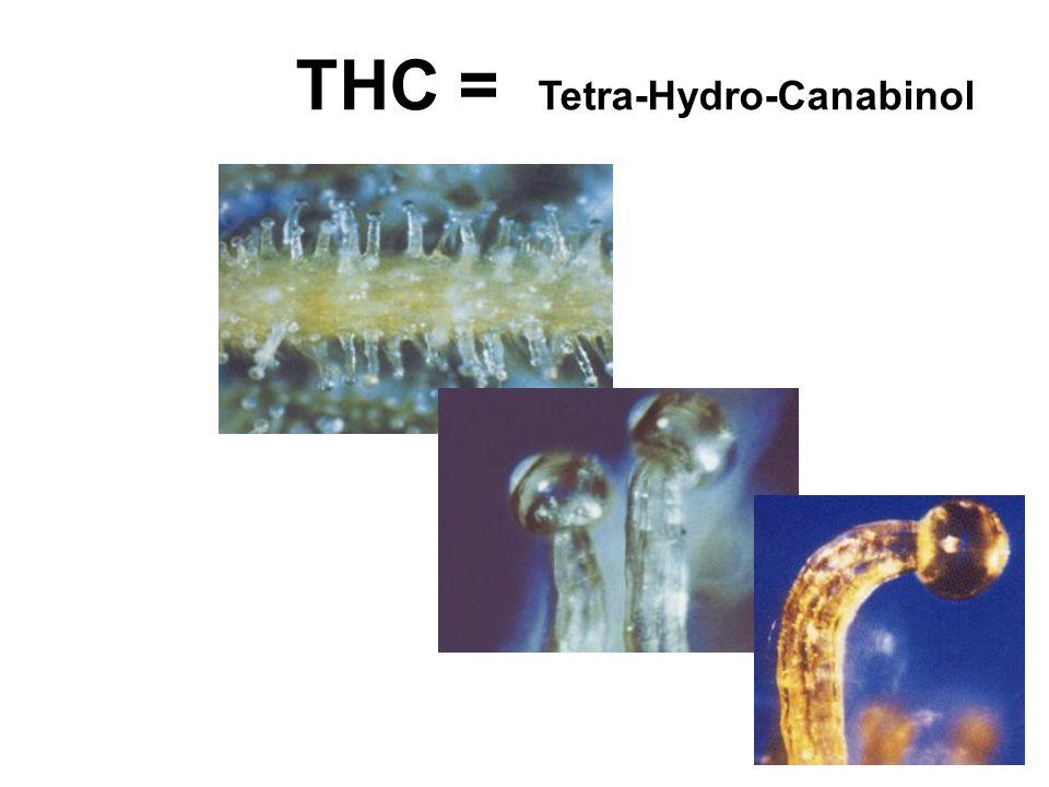THC = Tetra-Hydro-Canabinol