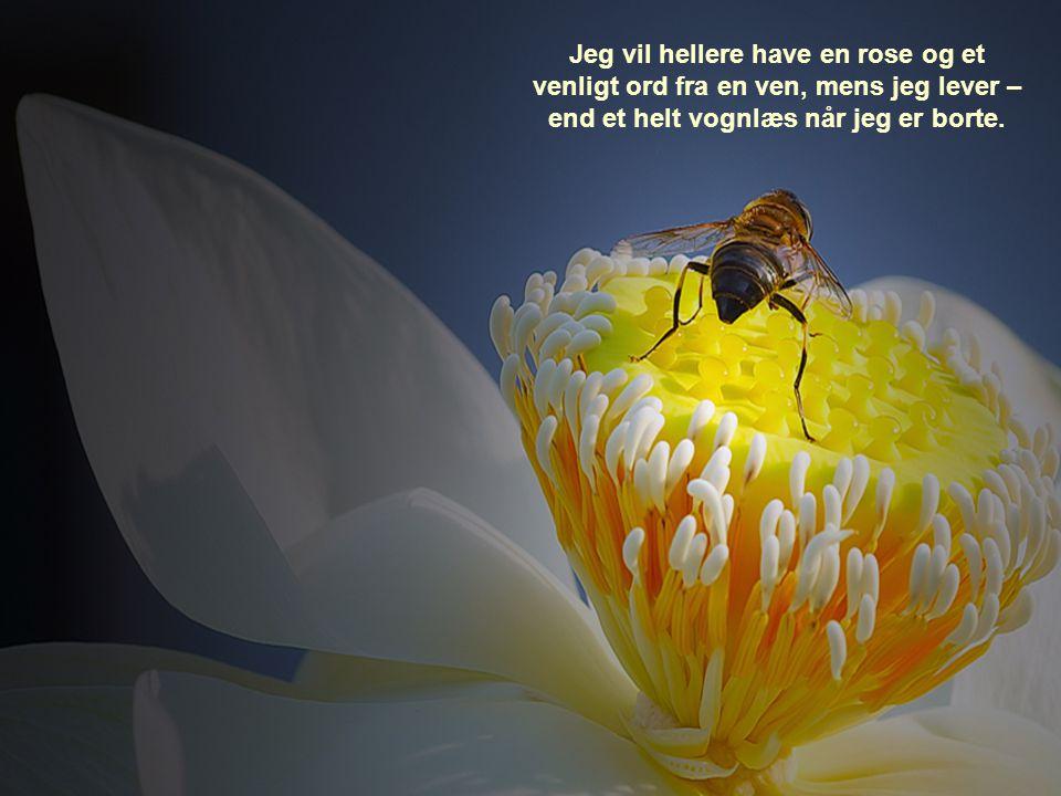 Jeg vil hellere have en rose og et venligt ord fra en ven, mens jeg lever – end et helt vognlæs når jeg er borte.