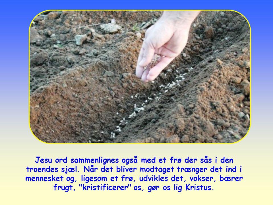 Jesu ord sammenlignes også med et frø der sås i den troendes sjæl