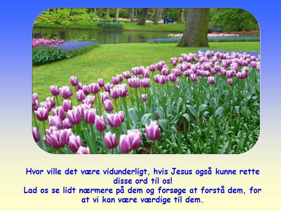 Hvor ville det være vidunderligt, hvis Jesus også kunne rette disse ord til os!