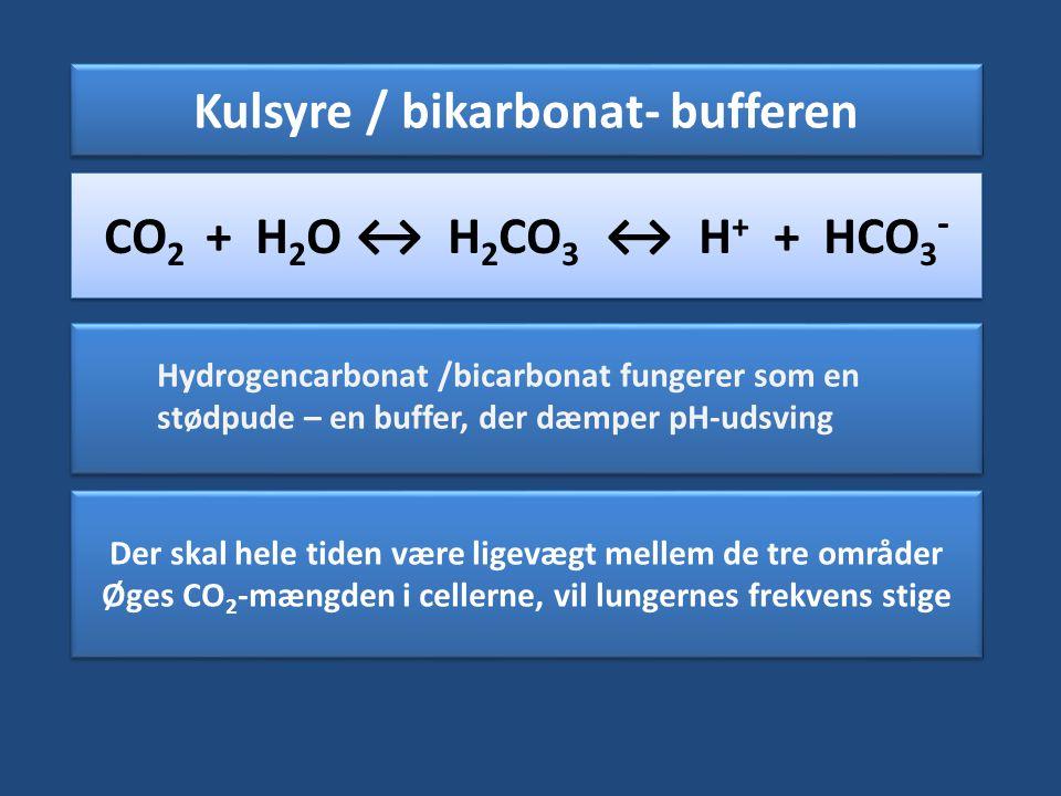 Kulsyre / bikarbonat- bufferen