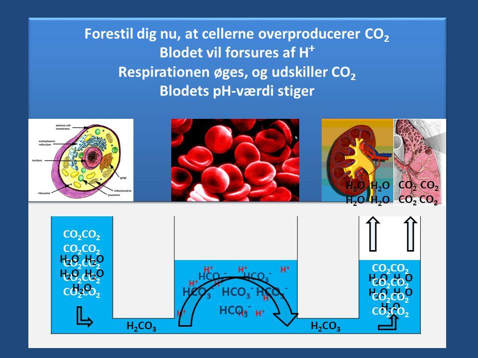 Forestil dig nu, at cellerne overproducerer CO2