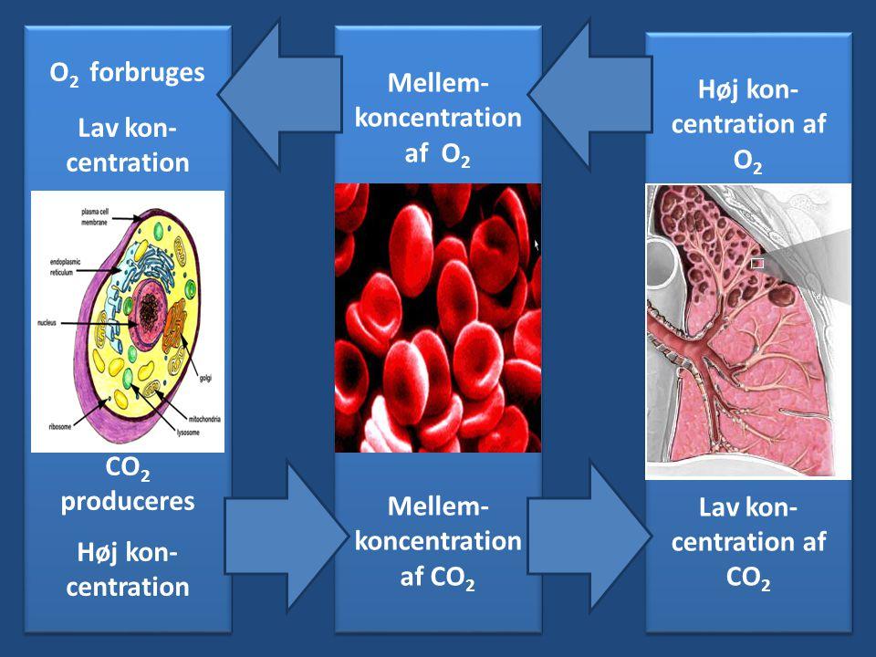 Blod Alveole Celle O2 forbruges Mellem-koncentration af O2