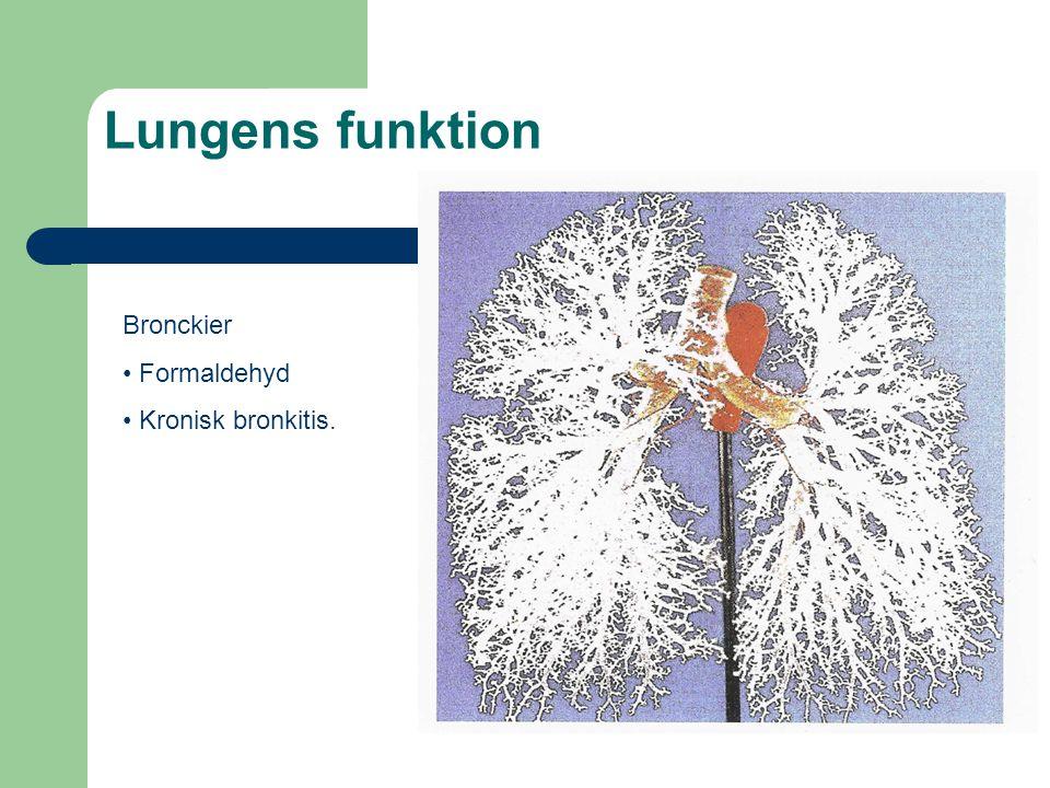 Lungens funktion Bronckier Formaldehyd Kronisk bronkitis.