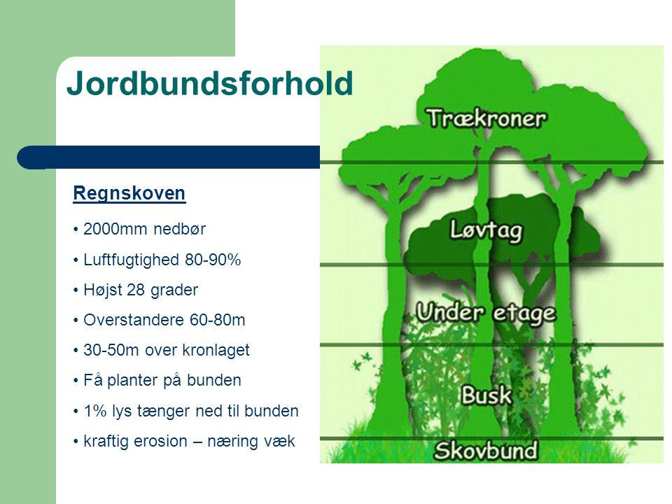 Jordbundsforhold Regnskoven 2000mm nedbør Luftfugtighed 80-90%