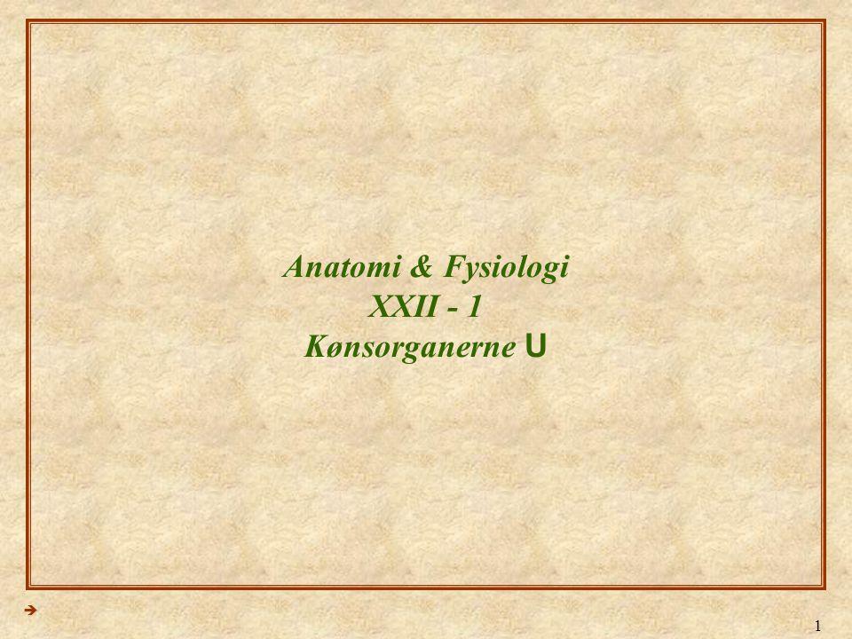 Anatomi & Fysiologi XXII - 1 Kønsorganerne U