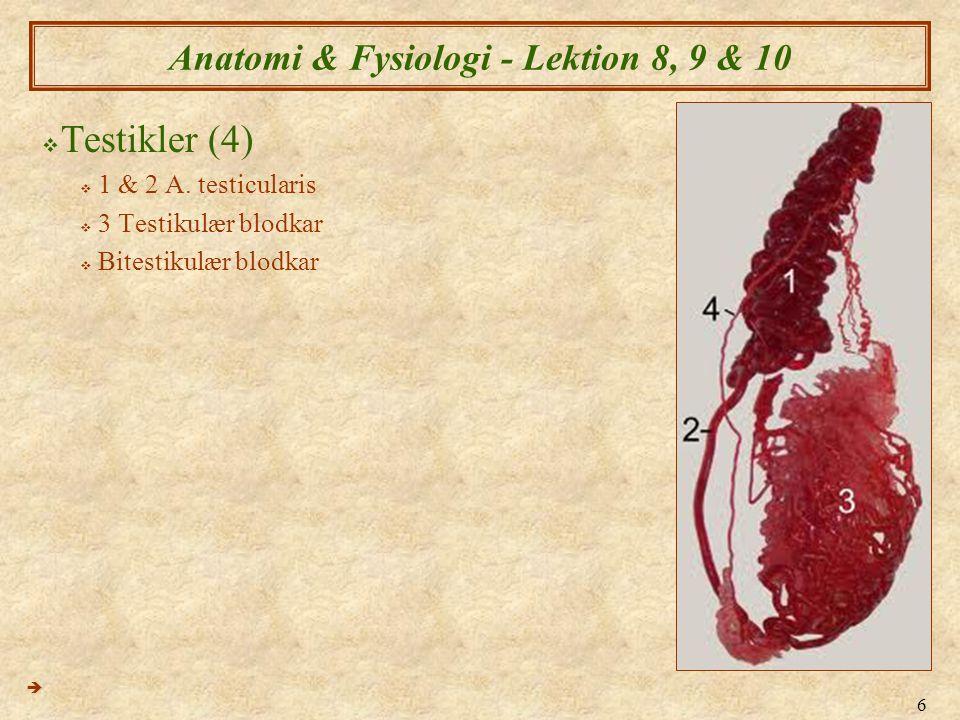 Anatomi & Fysiologi - Lektion 8, 9 & 10