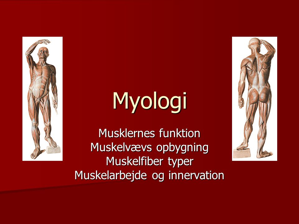 Muskelarbejde og innervation