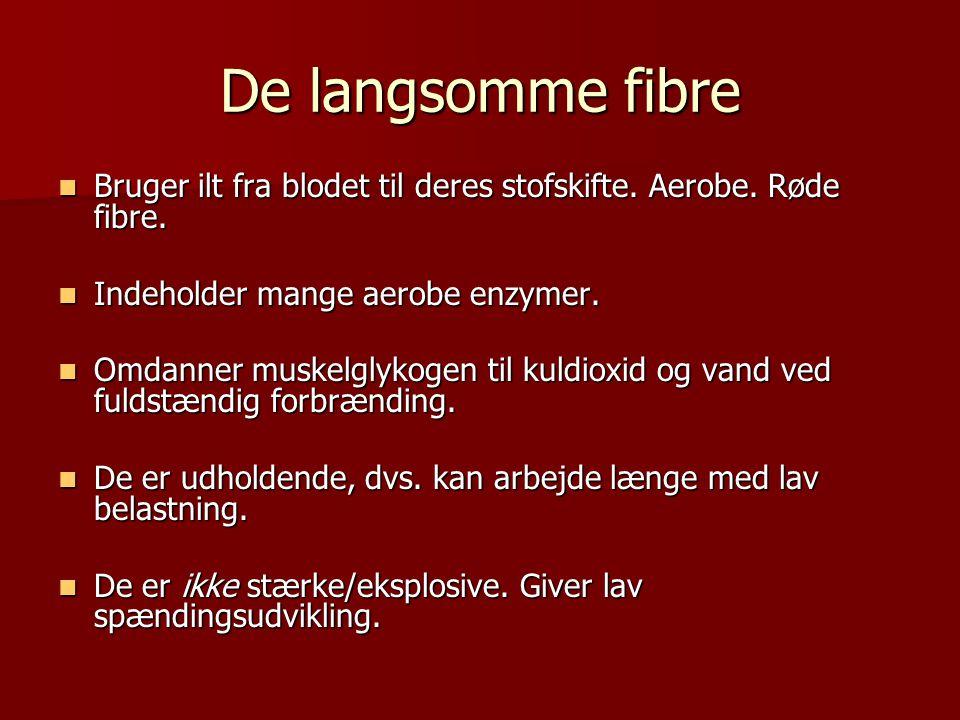 De langsomme fibre Bruger ilt fra blodet til deres stofskifte. Aerobe. Røde fibre. Indeholder mange aerobe enzymer.