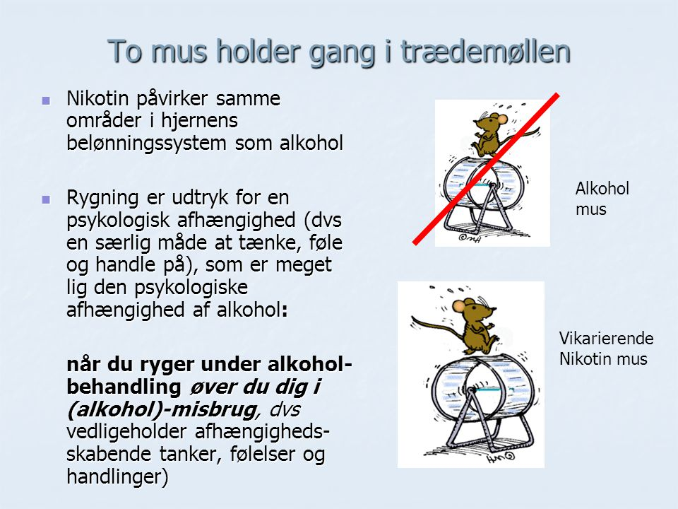 To mus holder gang i trædemøllen
