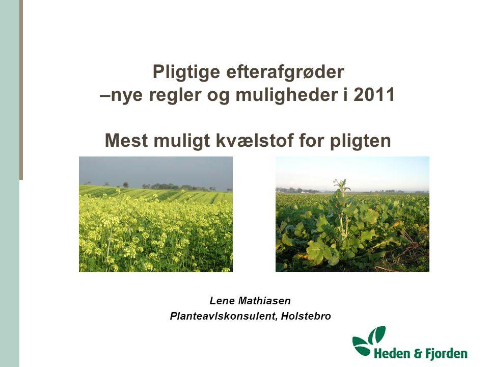 Lene Mathiasen Planteavlskonsulent, Holstebro