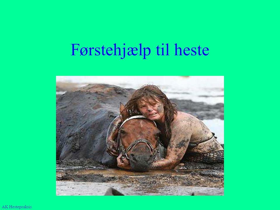 Førstehjælp til heste Hvornår, hvad, hvem AK Hestepraksis