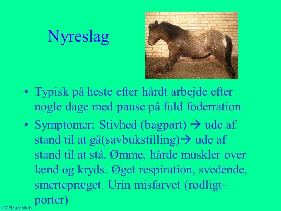Nyreslag Typisk på heste efter hårdt arbejde efter nogle dage med pause på fuld foderration.