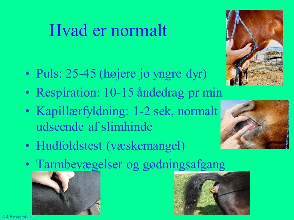 Hvad er normalt Puls: 25-45 (højere jo yngre dyr)