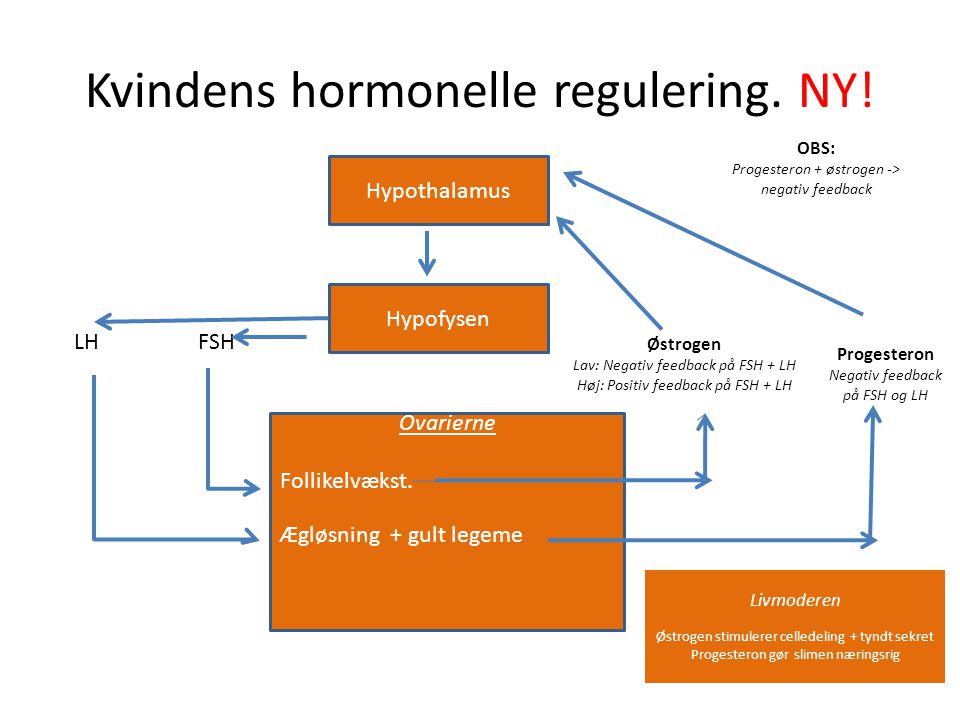 Kvindens hormonelle regulering. NY!