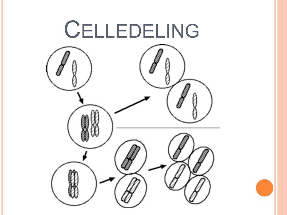 Celledeling