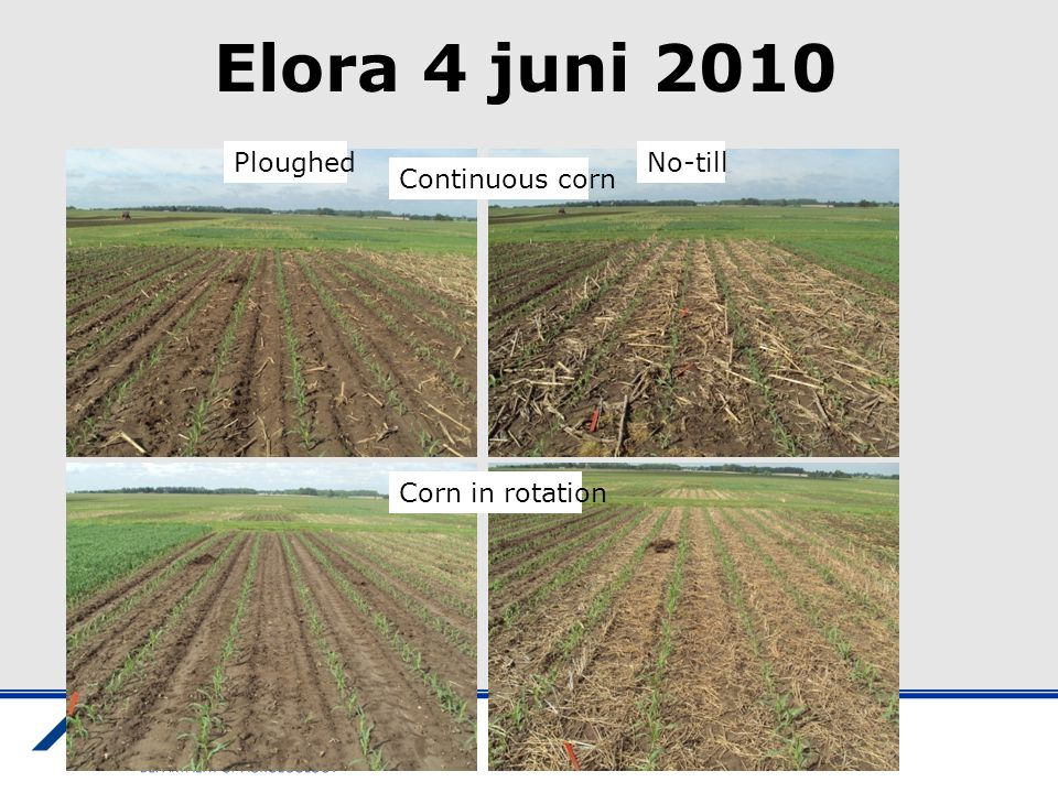 Elora 4 juni 2010 Ploughed No-till Continuous corn Corn in rotation