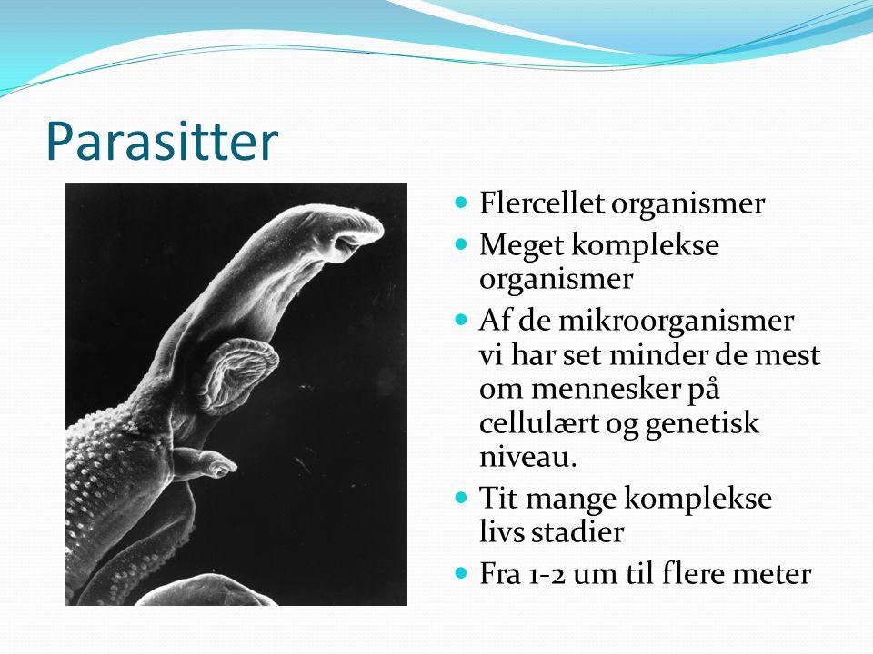 Parasitter Flercellet organismer Meget komplekse organismer