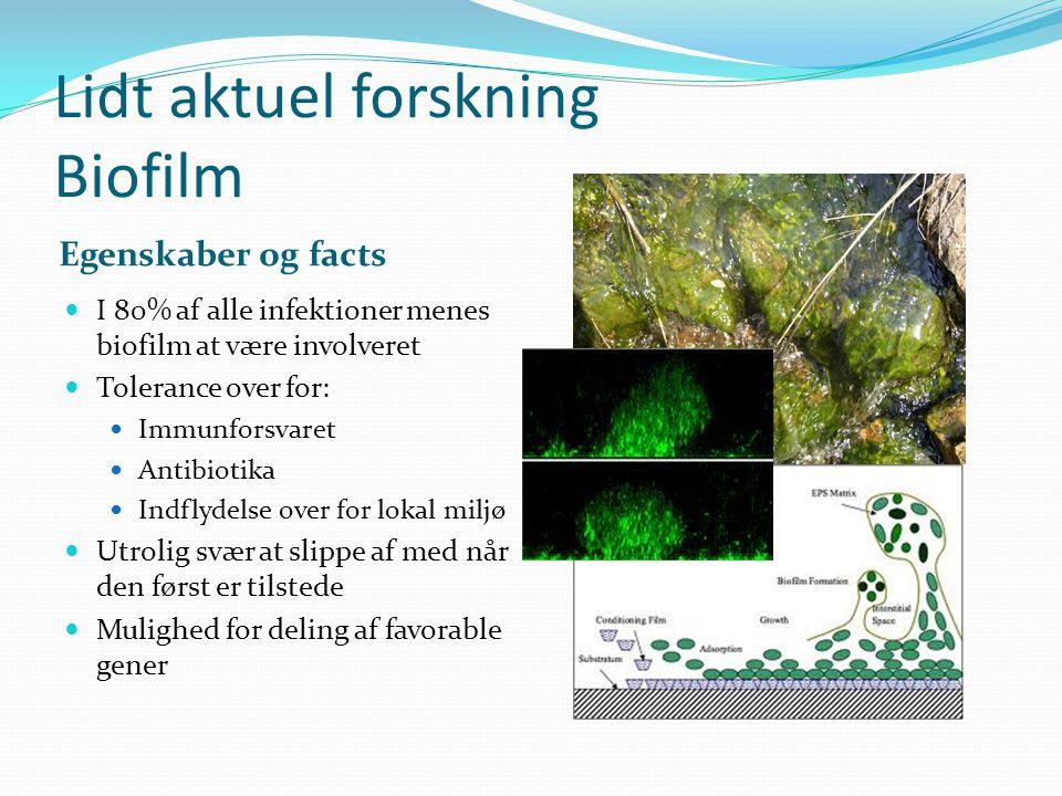 Lidt aktuel forskning Biofilm