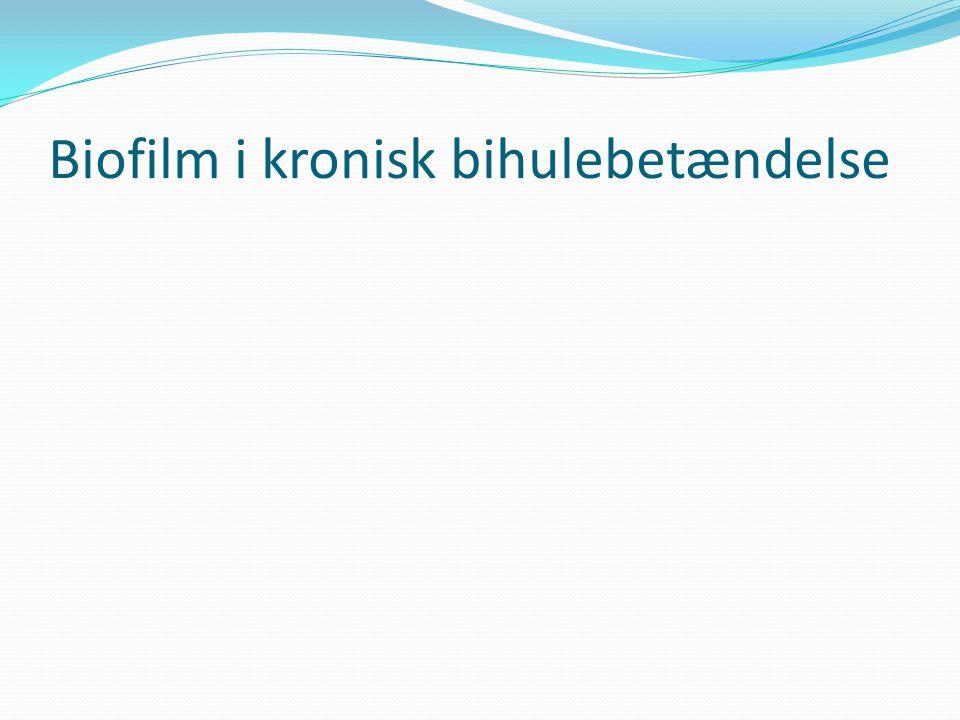 Biofilm i kronisk bihulebetændelse