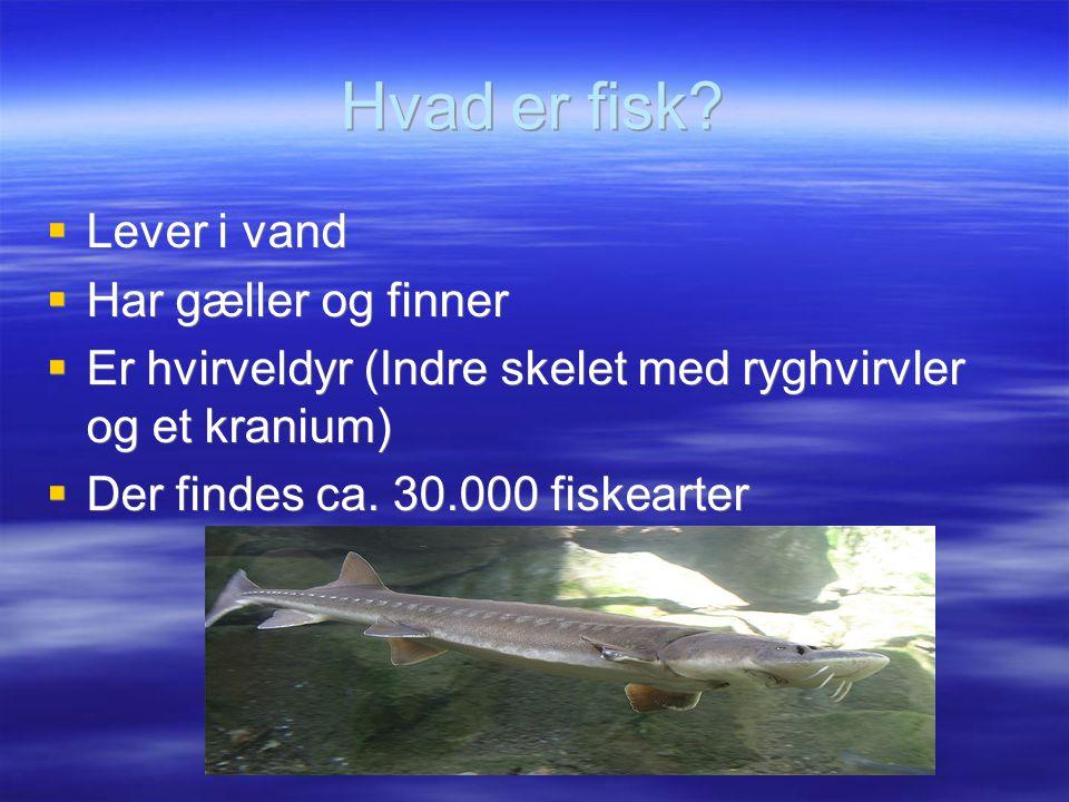 Hvad er fisk Lever i vand Har gæller og finner