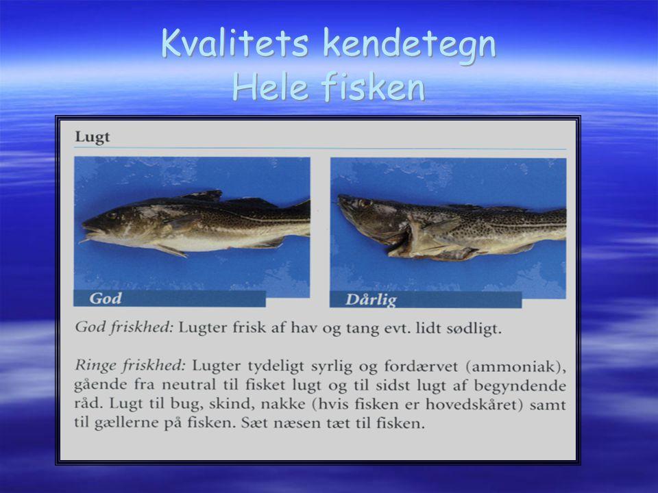 Kvalitets kendetegn Hele fisken