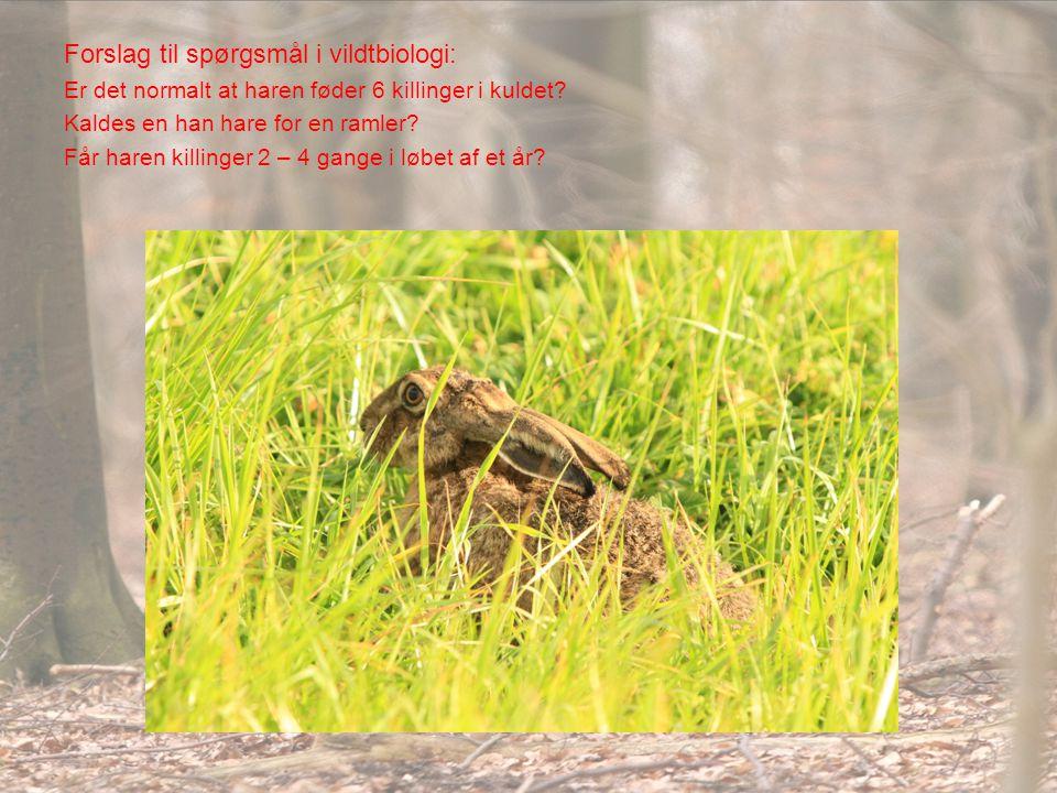 Forslag til spørgsmål i vildtbiologi:
