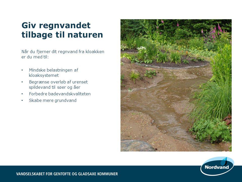 Giv regnvandet tilbage til naturen