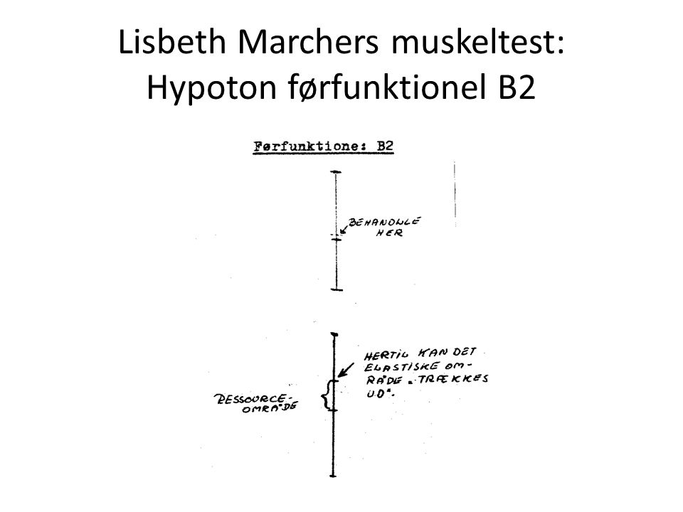 Lisbeth Marchers muskeltest: Hypoton førfunktionel B2