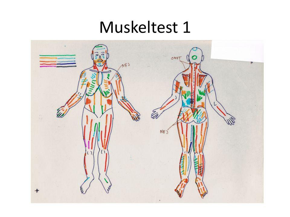 Muskeltest 1