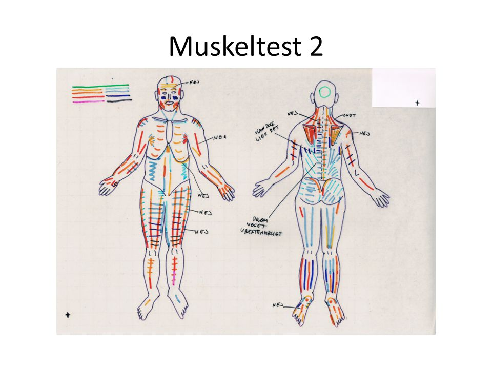 Muskeltest 2