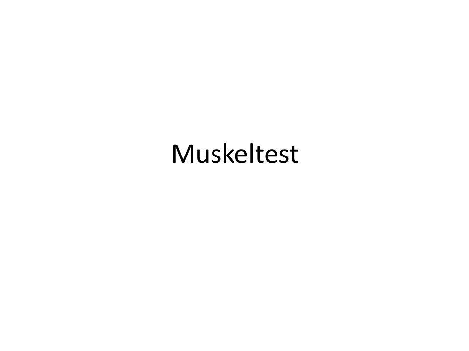 Muskeltest