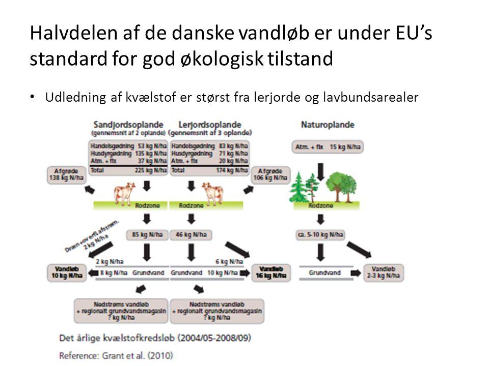 Halvdelen af de danske vandløb er under EU's standard for god økologisk tilstand