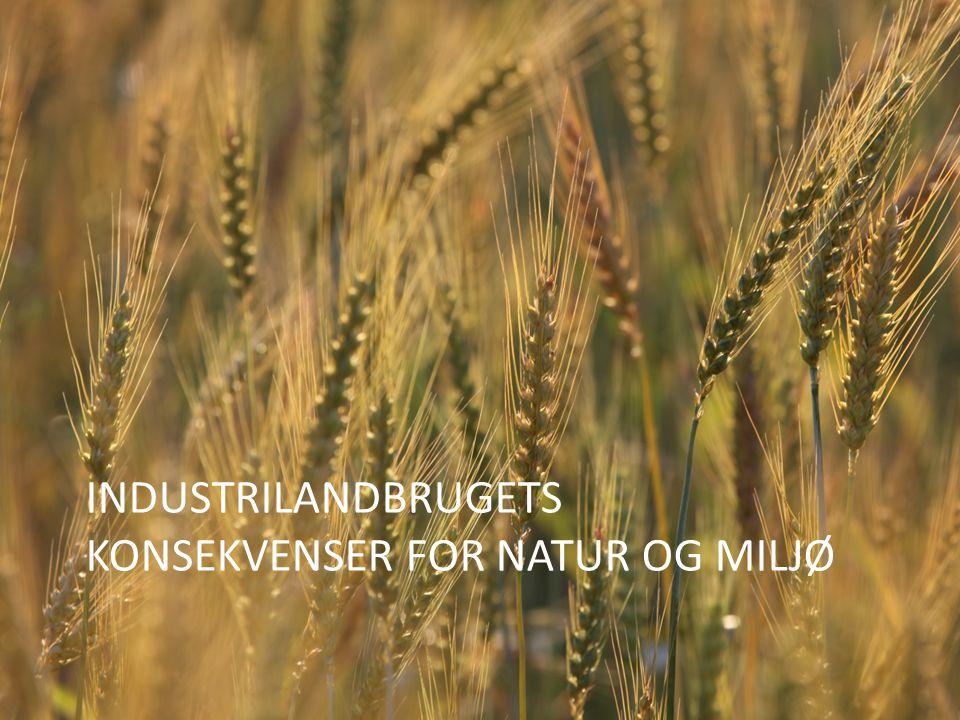 Industrilandbrugets konsekvenser for natur og miljø