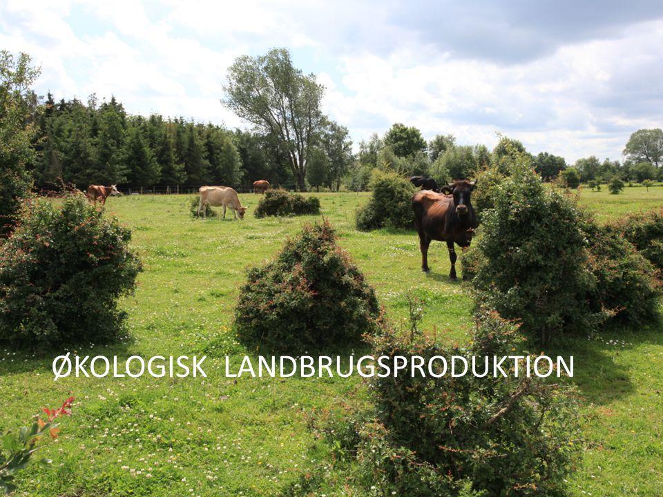 Økologisk landbrugsproduktion
