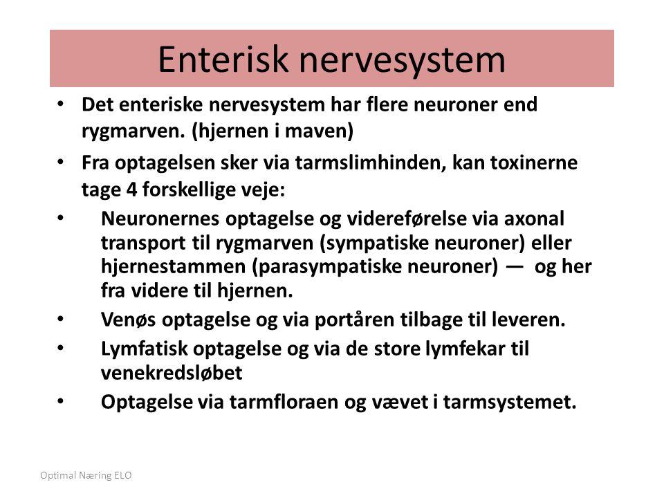Enterisk nervesystem Det enteriske nervesystem har flere neuroner end rygmarven. (hjernen i maven)