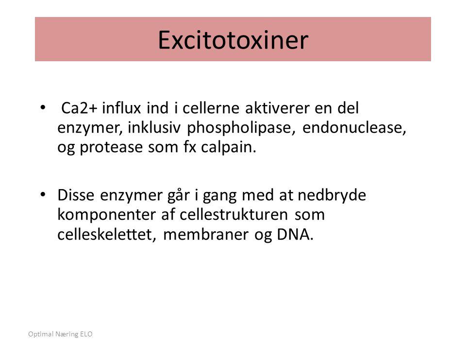 Excitotoxiner Ca2+ influx ind i cellerne aktiverer en del enzymer, inklusiv phospholipase, endonuclease, og protease som fx calpain.