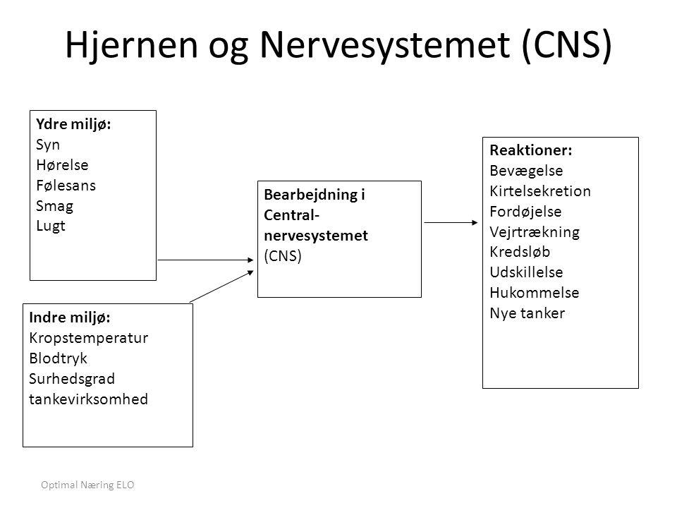 Hjernen og Nervesystemet (CNS)