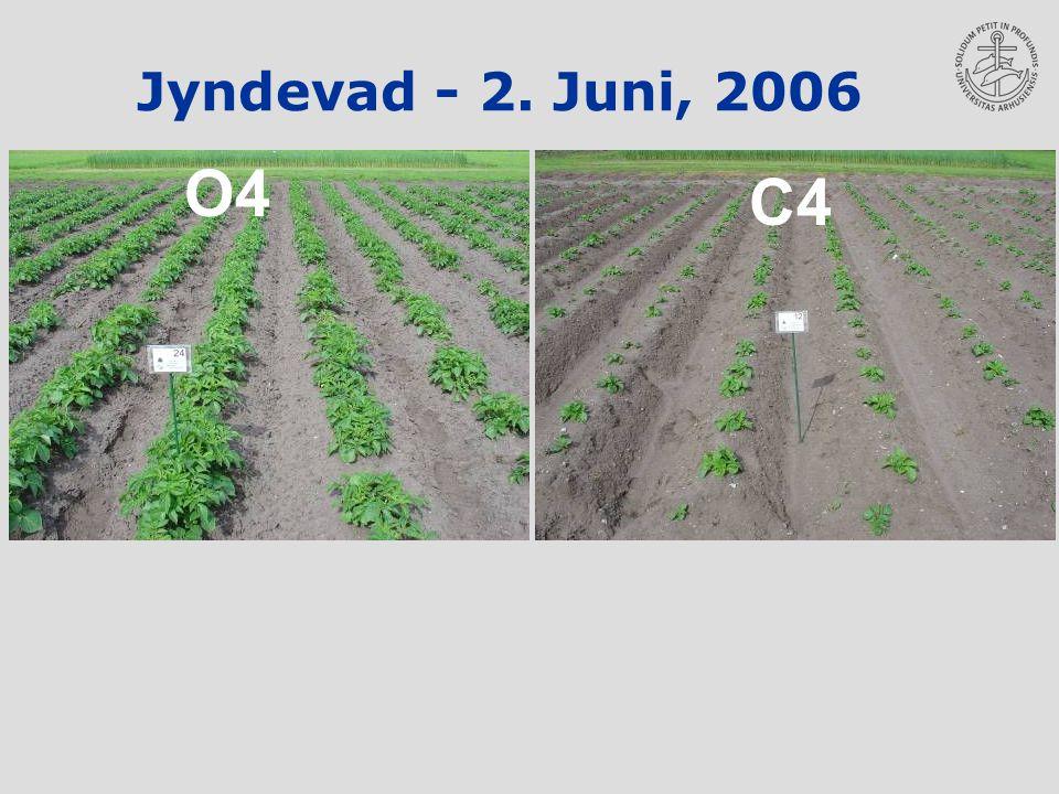 Jyndevad - 2. Juni, 2006 O4 C4
