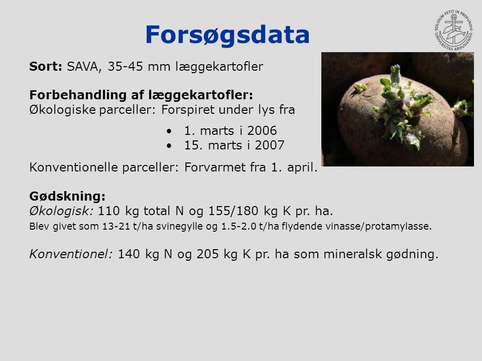 Forsøgsdata Sort: SAVA, 35-45 mm læggekartofler