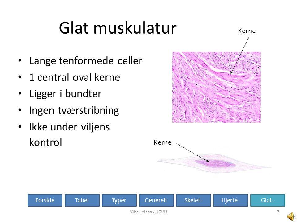 Glat muskulatur Lange tenformede celler 1 central oval kerne