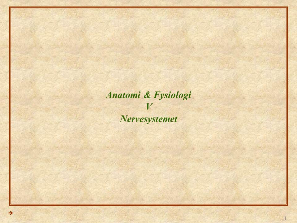 Anatomi & Fysiologi V Nervesystemet