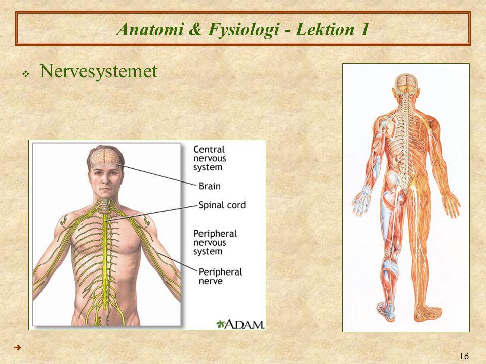 Anatomi & Fysiologi - Lektion 1