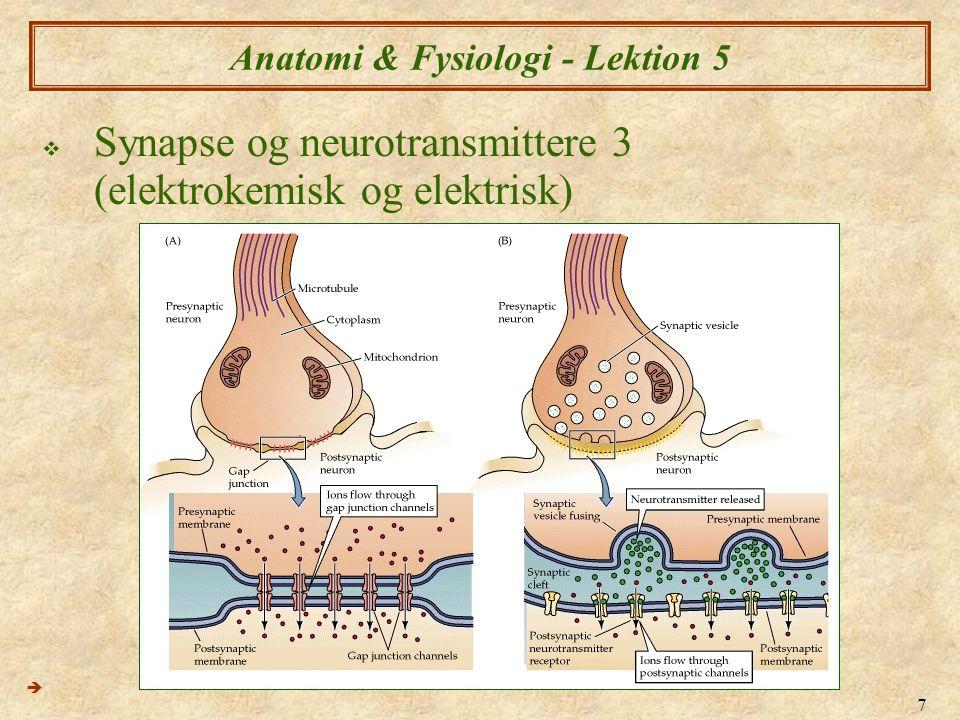 Anatomi & Fysiologi - Lektion 5
