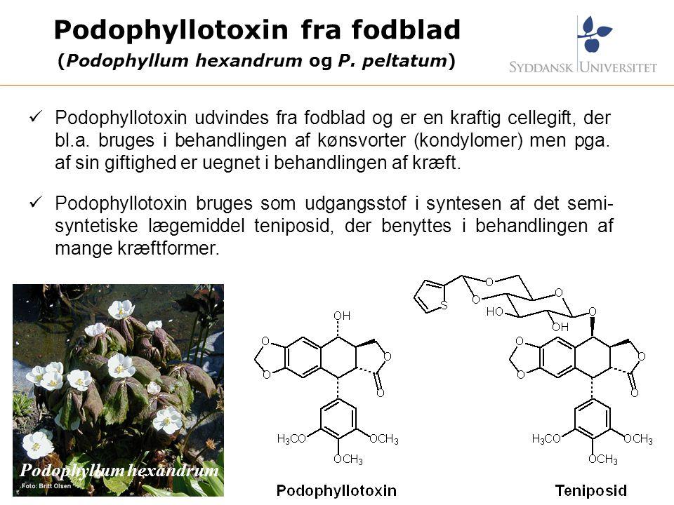 Podophyllotoxin fra fodblad (Podophyllum hexandrum og P. peltatum)