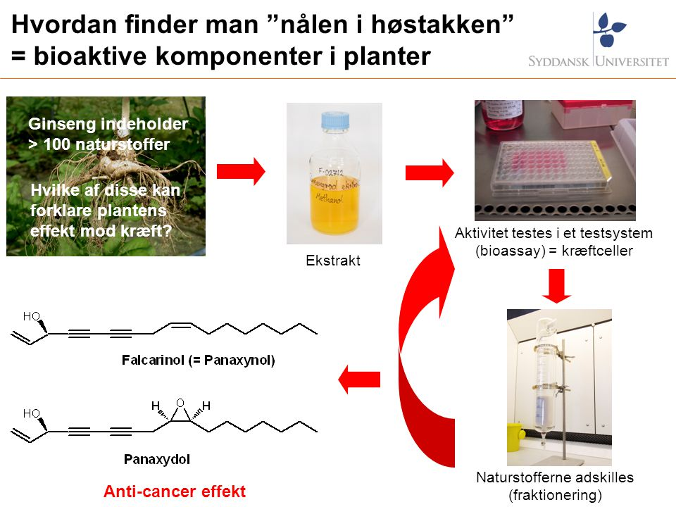 Hvordan finder man nålen i høstakken = bioaktive komponenter i planter