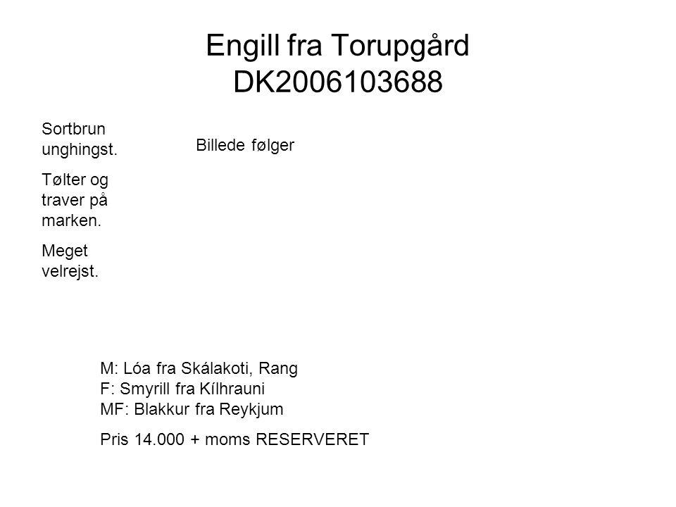 Engill fra Torupgård DK2006103688